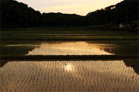 夕景-田植えされた寺家ふるさと村