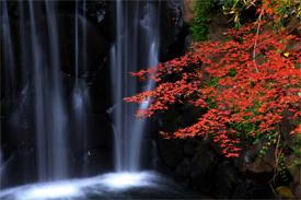 横浜市最大瀑布「白糸の滝」