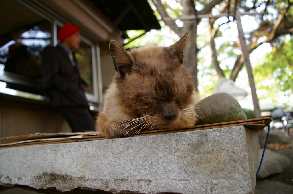 野良猫とおっちゃん