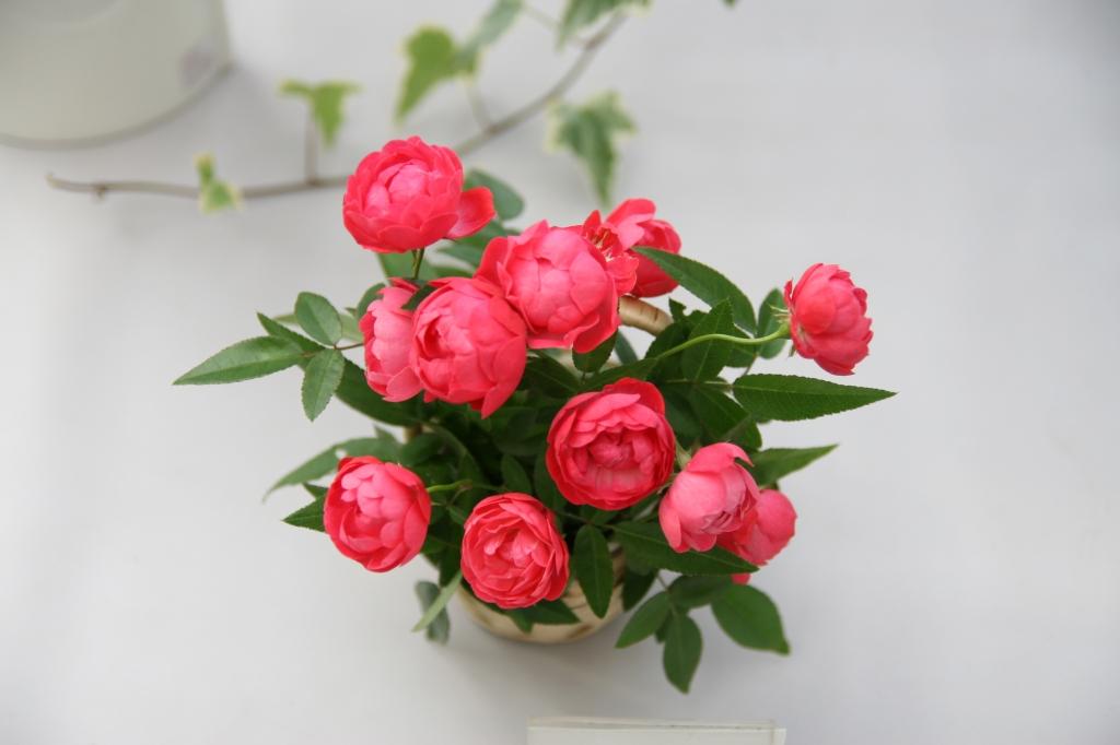 小さな花籠