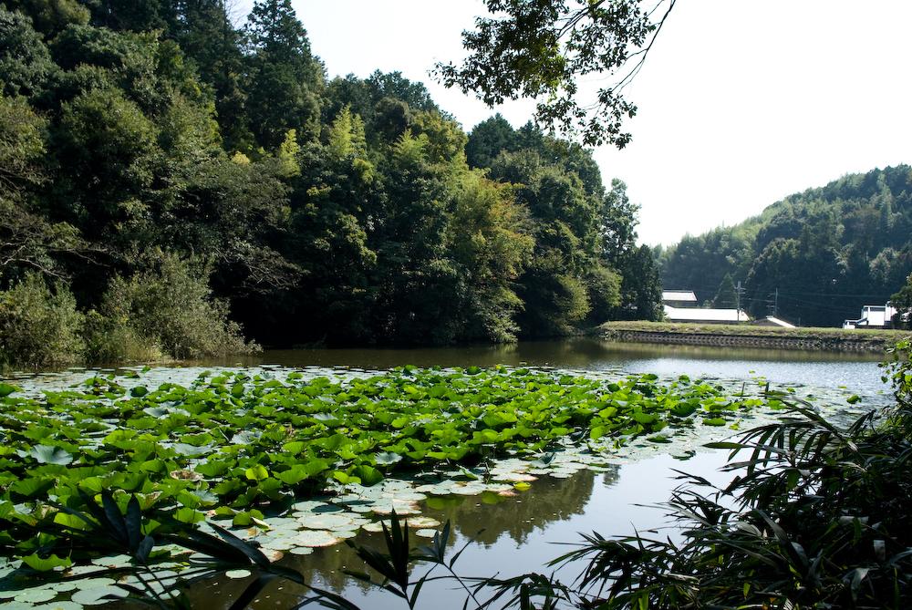 石上神宮 傍らの池