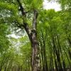 森のヴィーナス