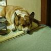犬(フラッシュなし)