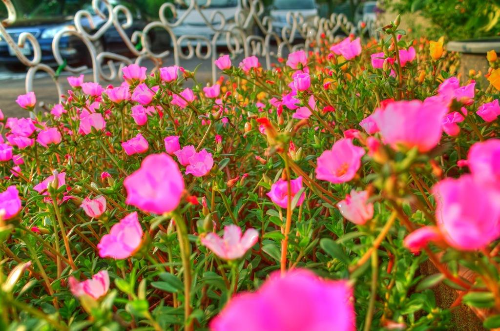 マンション花壇にて