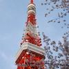 tokyo tower with sakura