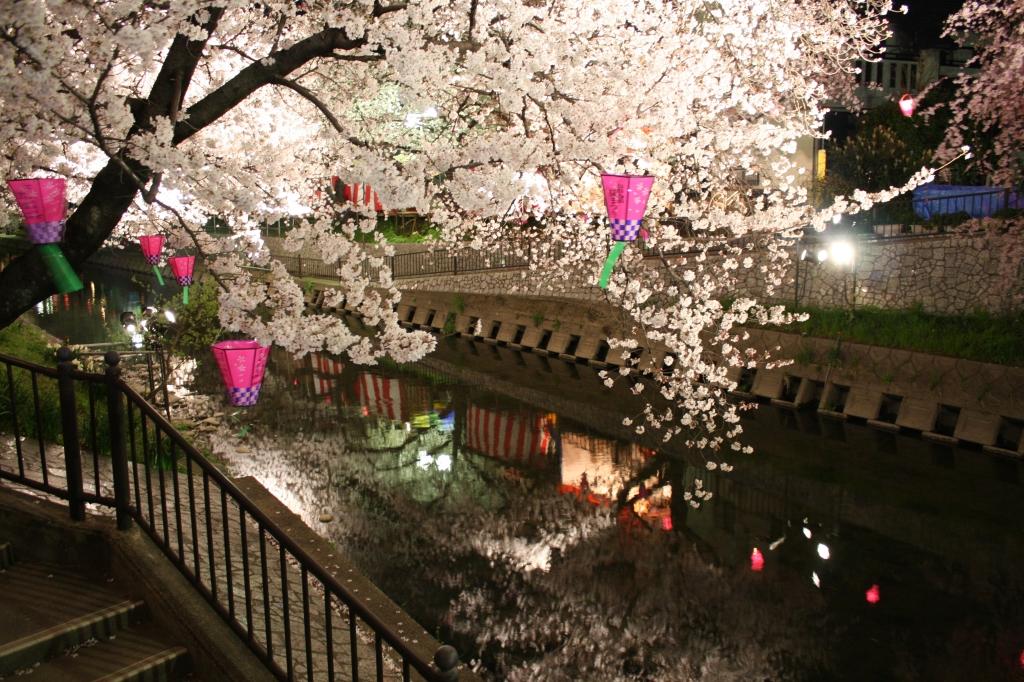 五条川の夜桜