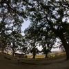 くすの木の世界