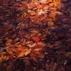 枯葉のプール