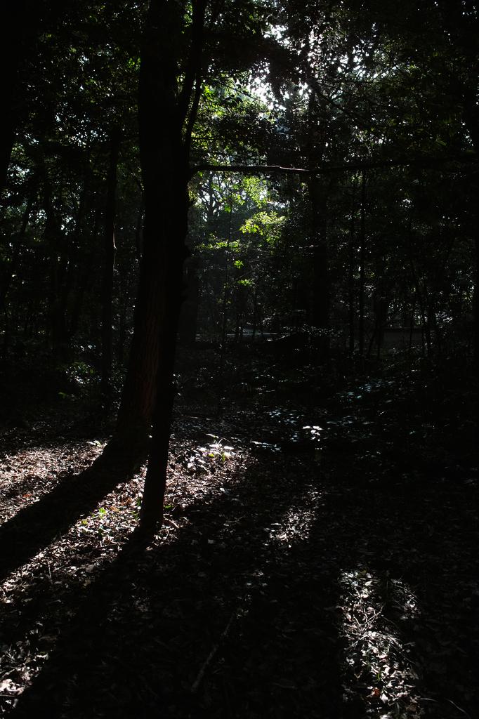 HARAJUKUの木