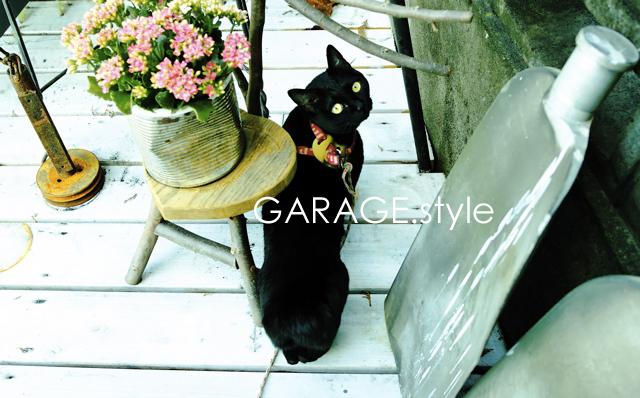 blackcat.