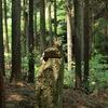 森の中にて