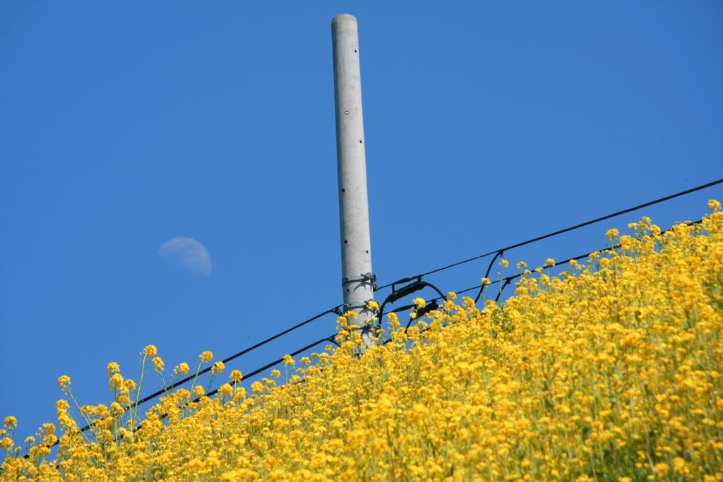 菜の花・線路・月