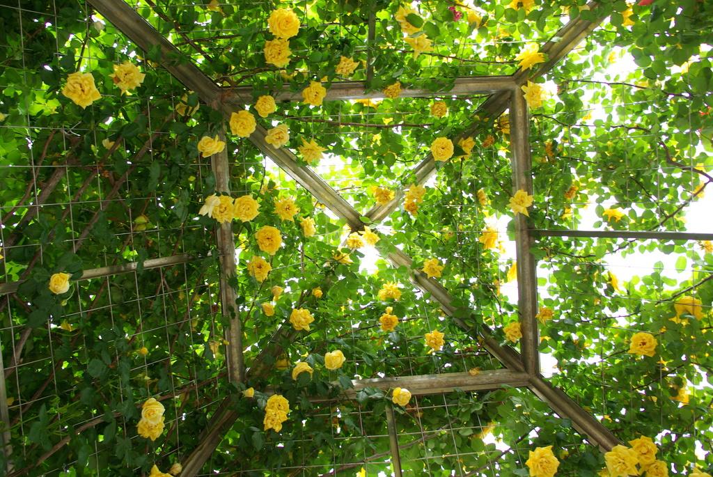 バラの屋根