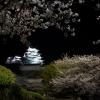 夜桜姫路城