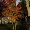 日暮れ紅葉