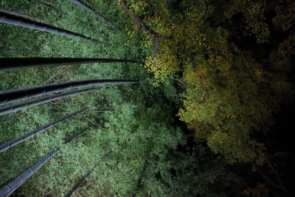 青蓮院門跡竹林