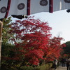 勧修寺の秋