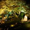 緑の紅葉と雲上三尊石