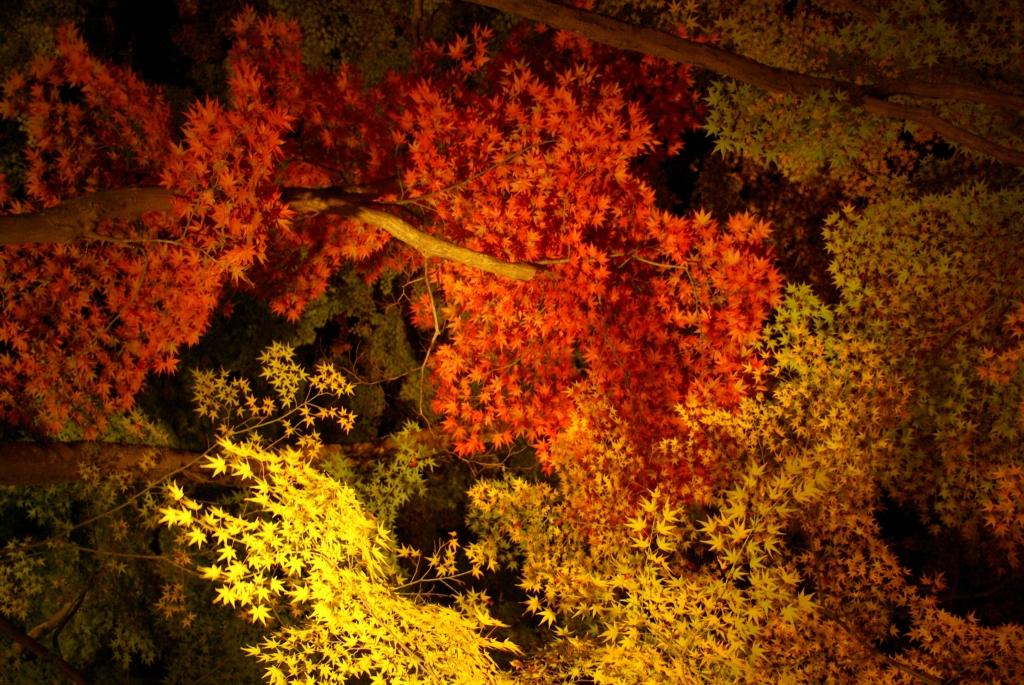 寶厳院の紅葉