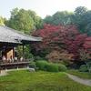 杉苔と紅葉のコラボれーション