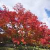万博記念公園 紅葉