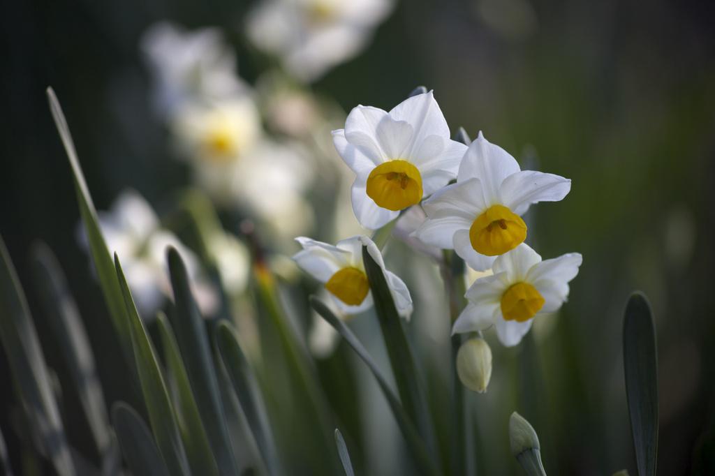 長居植物園 花