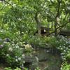 長居植物園 紫陽花園