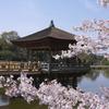 奈良 浮見堂 桜 2011