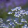 京都府立植物園 花