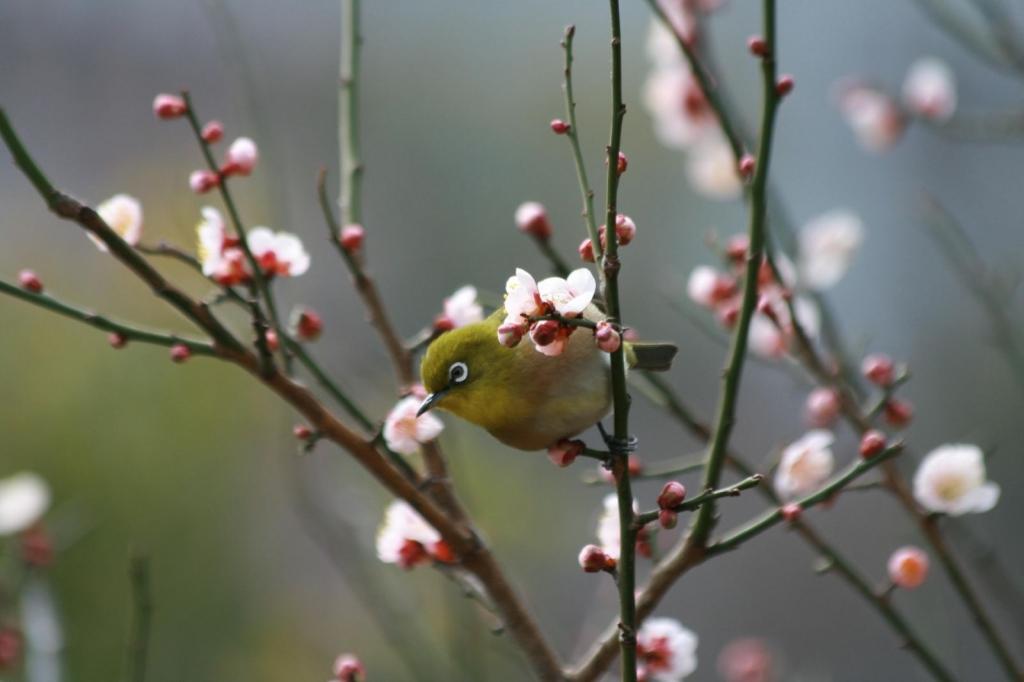 春の香に誘われて