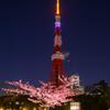 東京タワー哀悼の光ダイヤモンドヴェールと河津桜