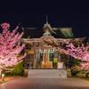 桜神宮・河津桜ライトアップ