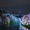 千鳥ヶ淵夜桜ライトアップ