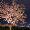 東京スカイツリー「舞」と夜桜ll