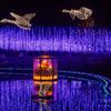 あしかがフラワーパーク「光の花の庭」・奇蹟の大藤と水景