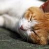 金剛山山頂付近にいたノラ猫