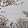 御殿場 桜公園