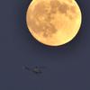 月下を行く