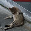 野良猫06
