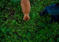 NIKON NIKON D700で撮影した動物(koro and sei)の写真(画像)
