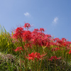 青い空と赤い花