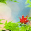 赤い葉一つ