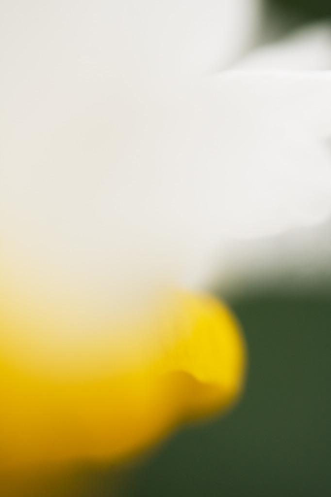819羽を持つ花