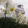 691花と灯台