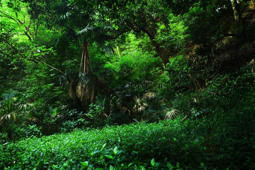 264静かな森