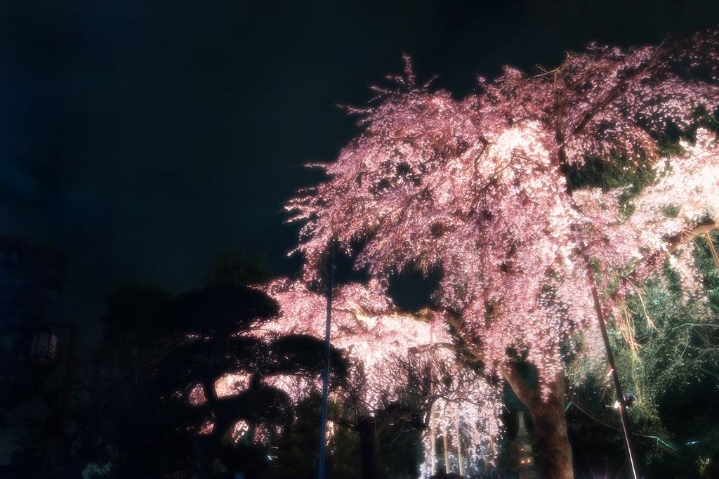 859夢桜