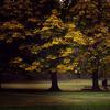 565秋の大木