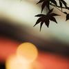 632神社とモミジ