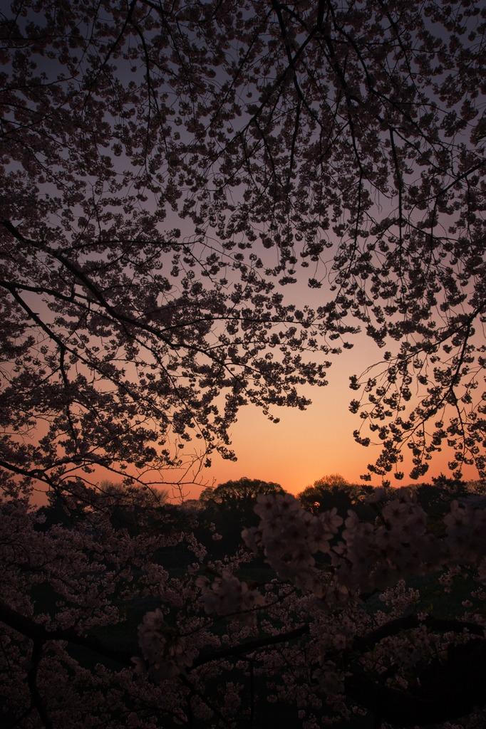 花が目覚める時