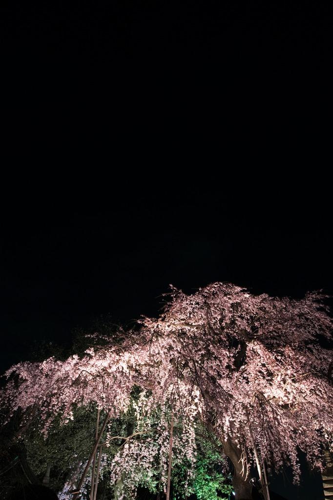 860夜桜